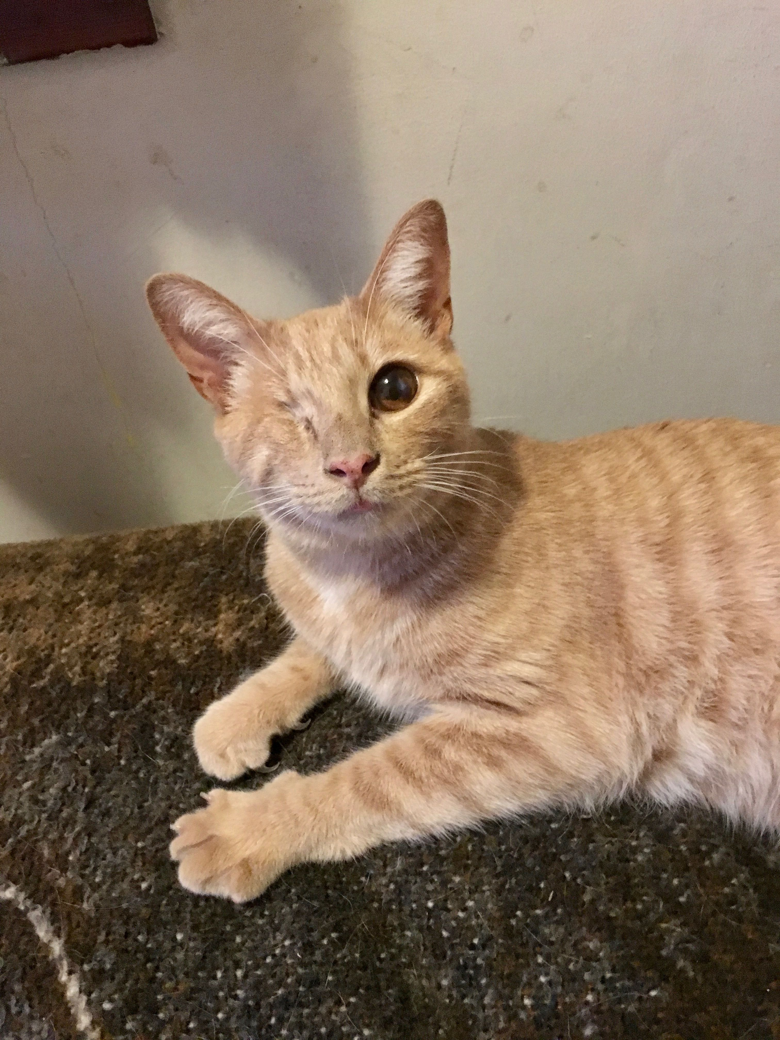 Adopt Isaiah on Pet adoption, Cute animals, Crazy cats