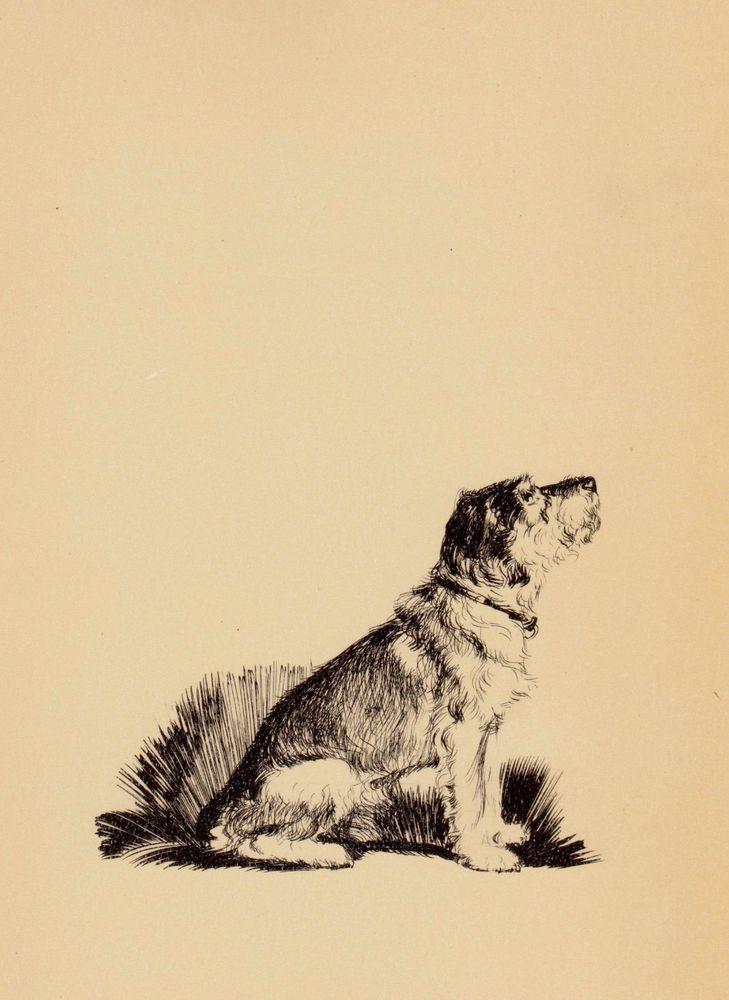 1935 Antique SCHNAUZER Print Diana Thorne Vintage Art Dog Gallery ...
