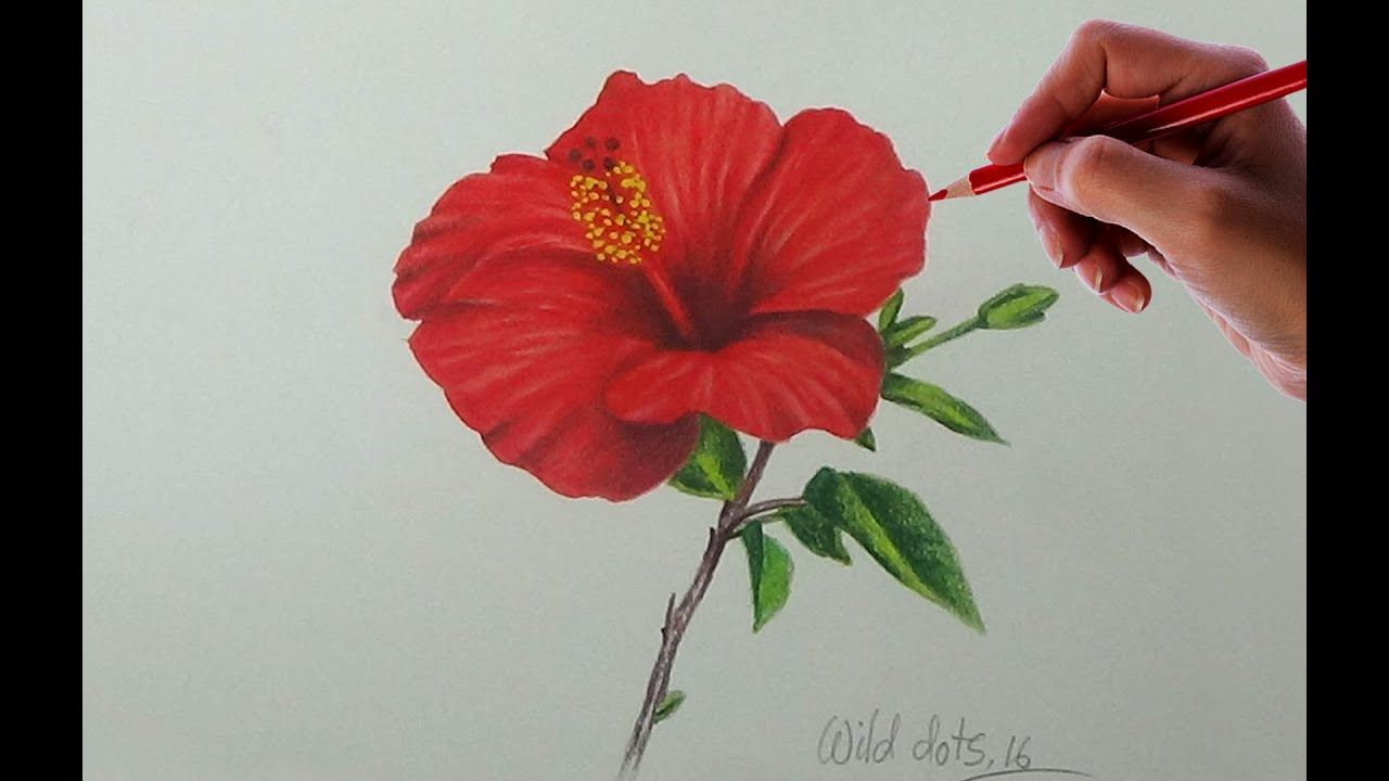 Drawing A Flower China Rose Easy And Simple Way In 2020 Flower Drawings With Color China Rose Flower Drawing