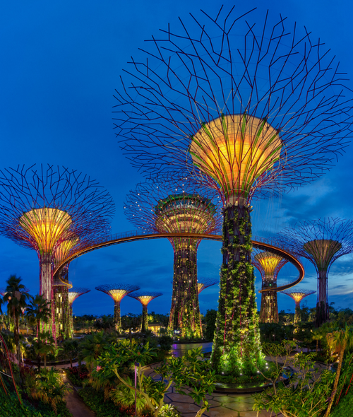dca7b32cae04c29d6678a288c0a0166d - Supertree Grove Gardens By The Bay Singapore
