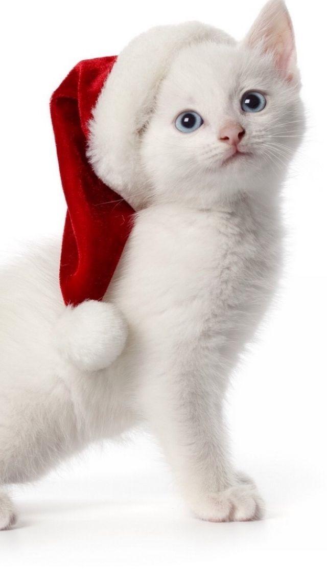 Christmas Spirit The Iphone Ios7 Retina Wallpaper I Like Christmas Cats Christmas Animals Kittens Christmas hd wallpaper puppies kitten