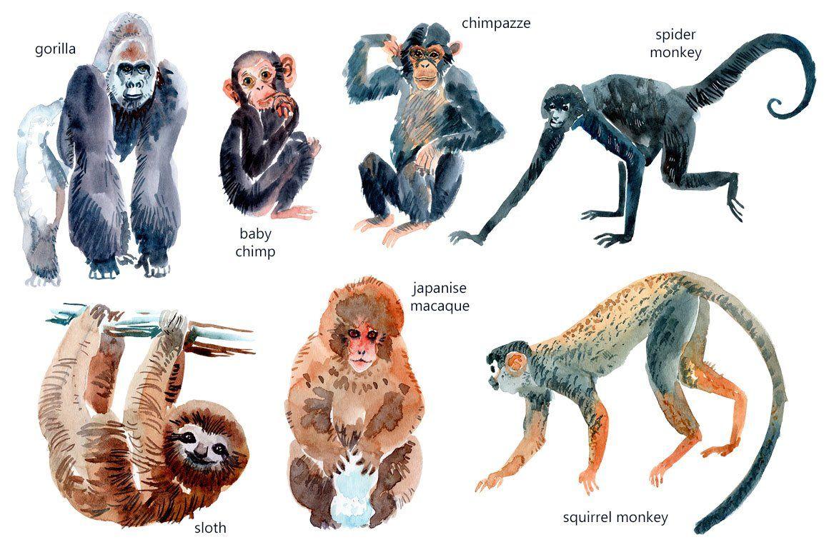 Watercolor Happy Monkeys Animal Illustration Art Animal Illustration Monkey Art