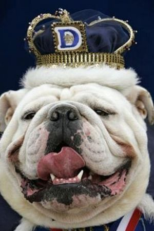 King Of The Castle Pups Dogs Most Beautiful Dogs Beauty Contest