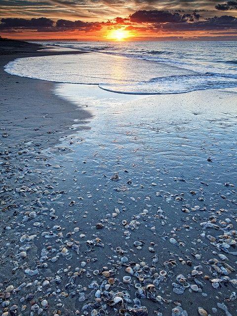 A Joyous Distraction Along The Morning Beach Walk Simply