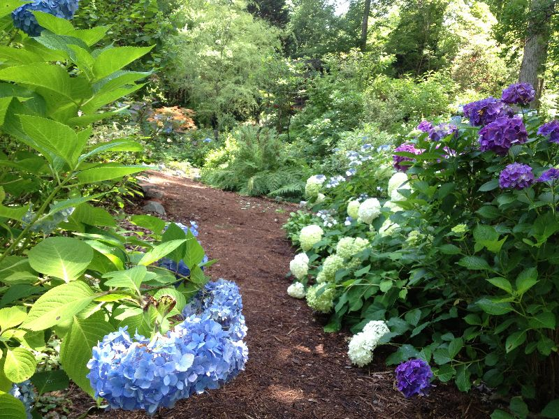 UNC Charlotte Botanical Gardens : Sharing The World of Plants With ...