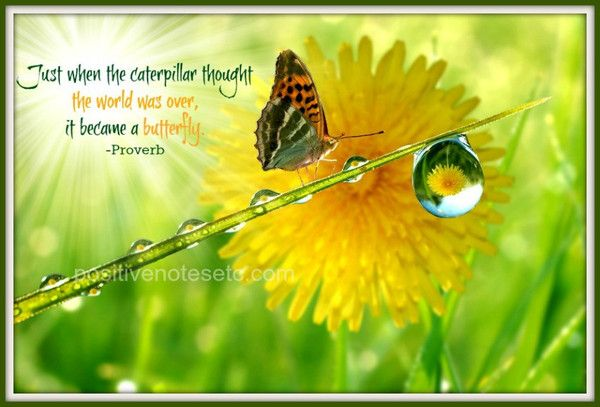 Just when the caterpillar thought the world was over, it became a butterfly. ~ English Proverb