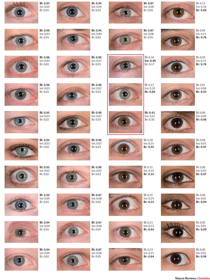 Structural Eye Color Google Search Abottleinthefutureocean In