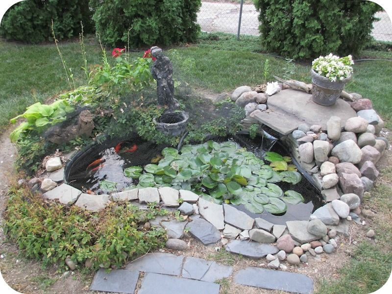 Koi pond detroit video daily where 39 s buster the for Easy fish pond