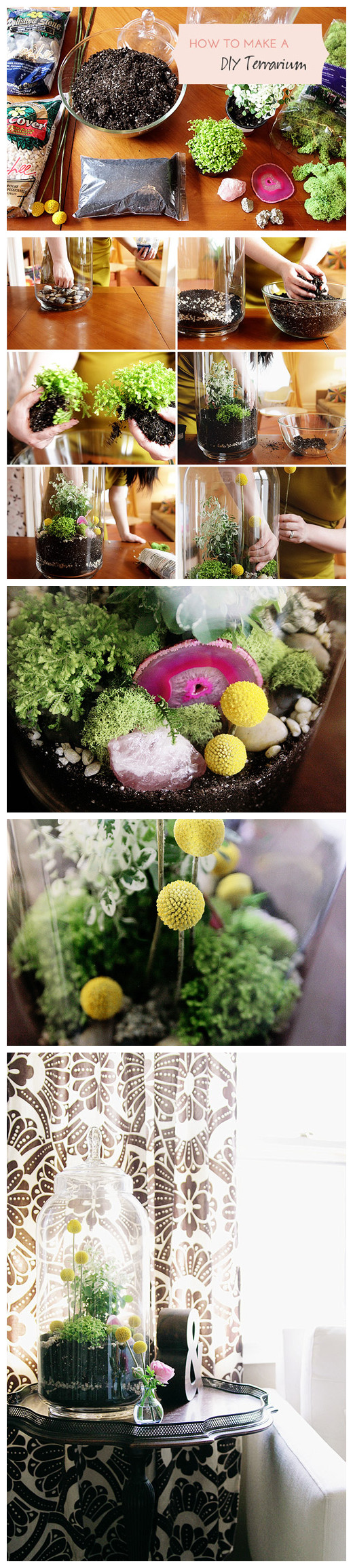 Not just plants.  The DIY home decorative potted shape Terrarium is recently very popular home decorating, transparent glassware, healthy soil, green plants, adding some exquisite stone, just like an indoor forest, make it difficult to resist.  Manual design diy Terrarium become a label of plant lovers.