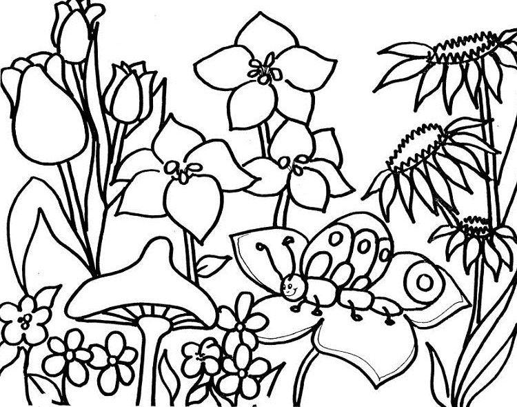 dibujos primavera png - Buscar con Google | Para colorear ...