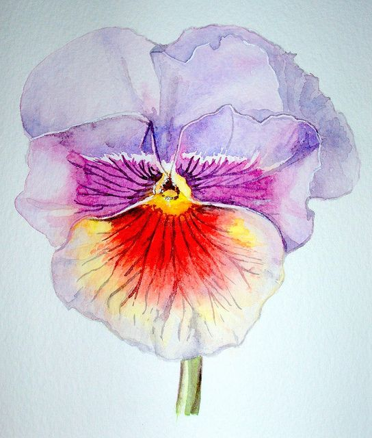 Pansy Flower Painting Floral Watercolor Watercolor Flowers