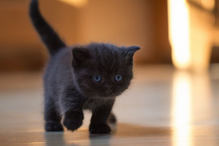 Seattle Animal Shelter Offers Free Black Cat Adoption This Black Friday Pets Cats Cats Cat Pics