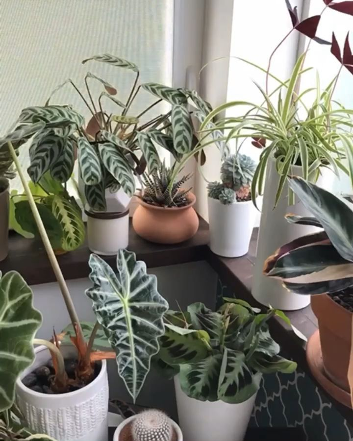 Realizing how houseplants interact with your indoor environment, can make you more aware of their needs as plant parents. #Balcony Garden #Balcony Garden apartment #Balcony Garden ideas #Balcony Garden small #lapse #Natural #therapy #time #video #World