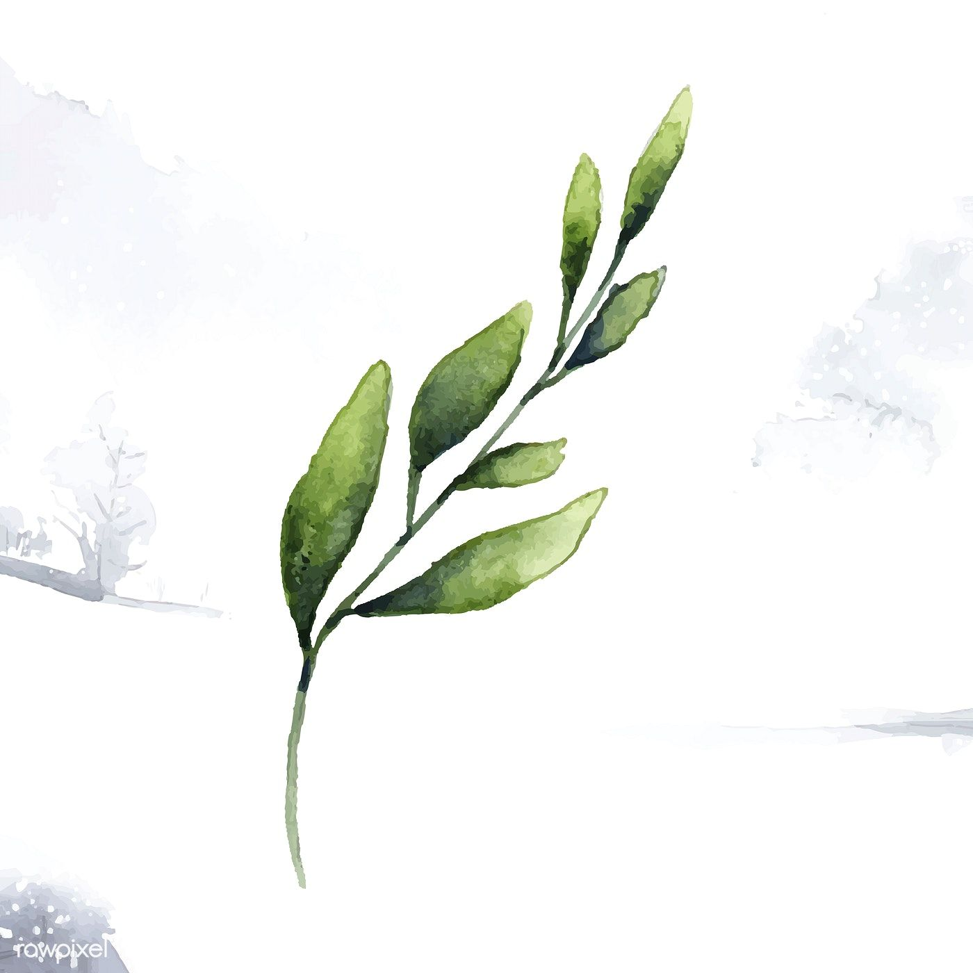 Hand Drawn Olive Branch Watercolor Style Vector Free Image By Rawpixel Com Olive Branch Leaf Drawing How To Draw Hands