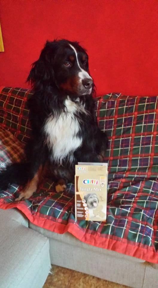 Aurora <3 #biscotti #Cliffi. Jungla Mix #dog #biscuits