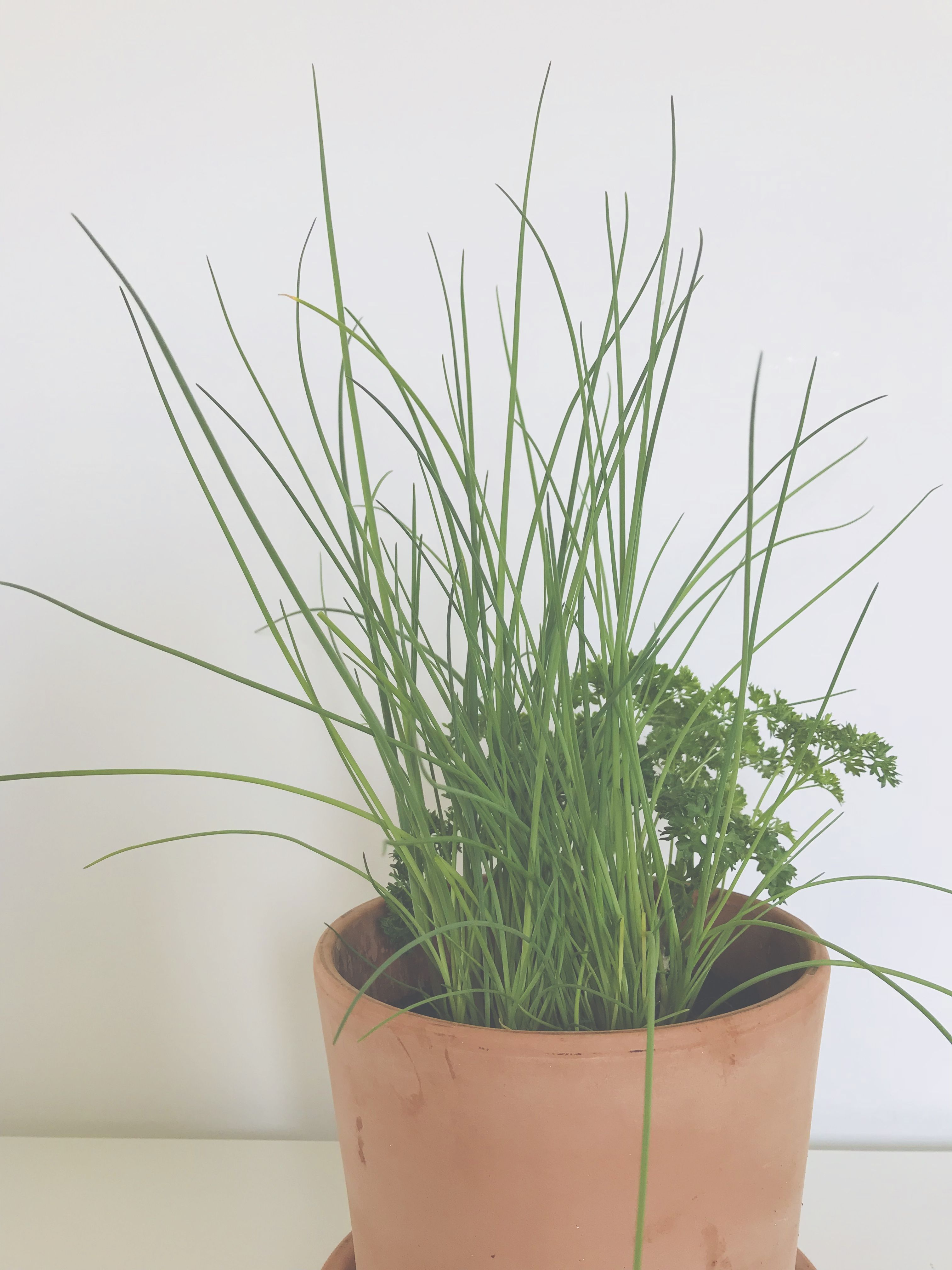 Self Herb Preserve Your Chives For Winter Vegan Cuisine