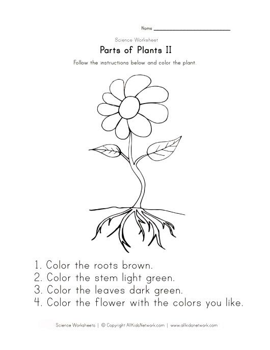 Free Printable Parts Of A Flower Worksheet