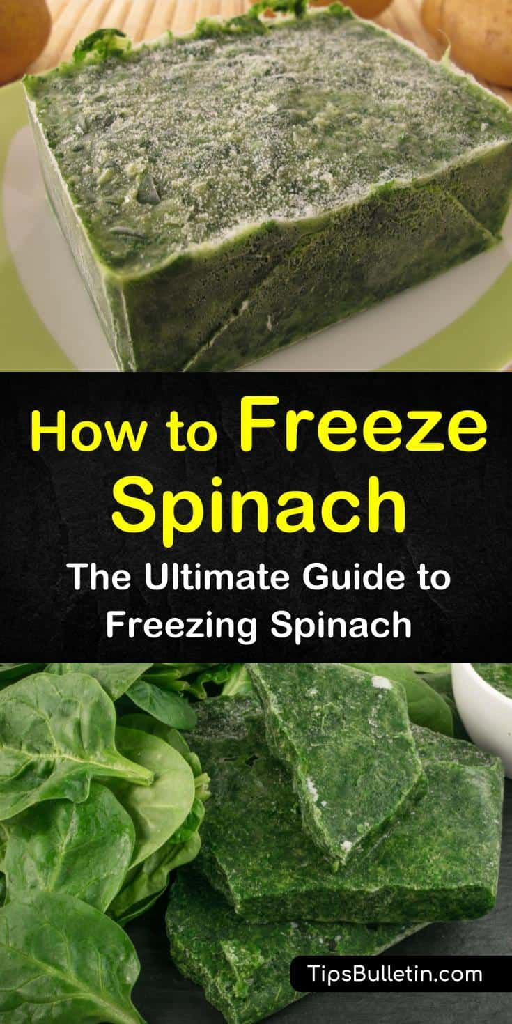 how to preserve fresh spinach leaves