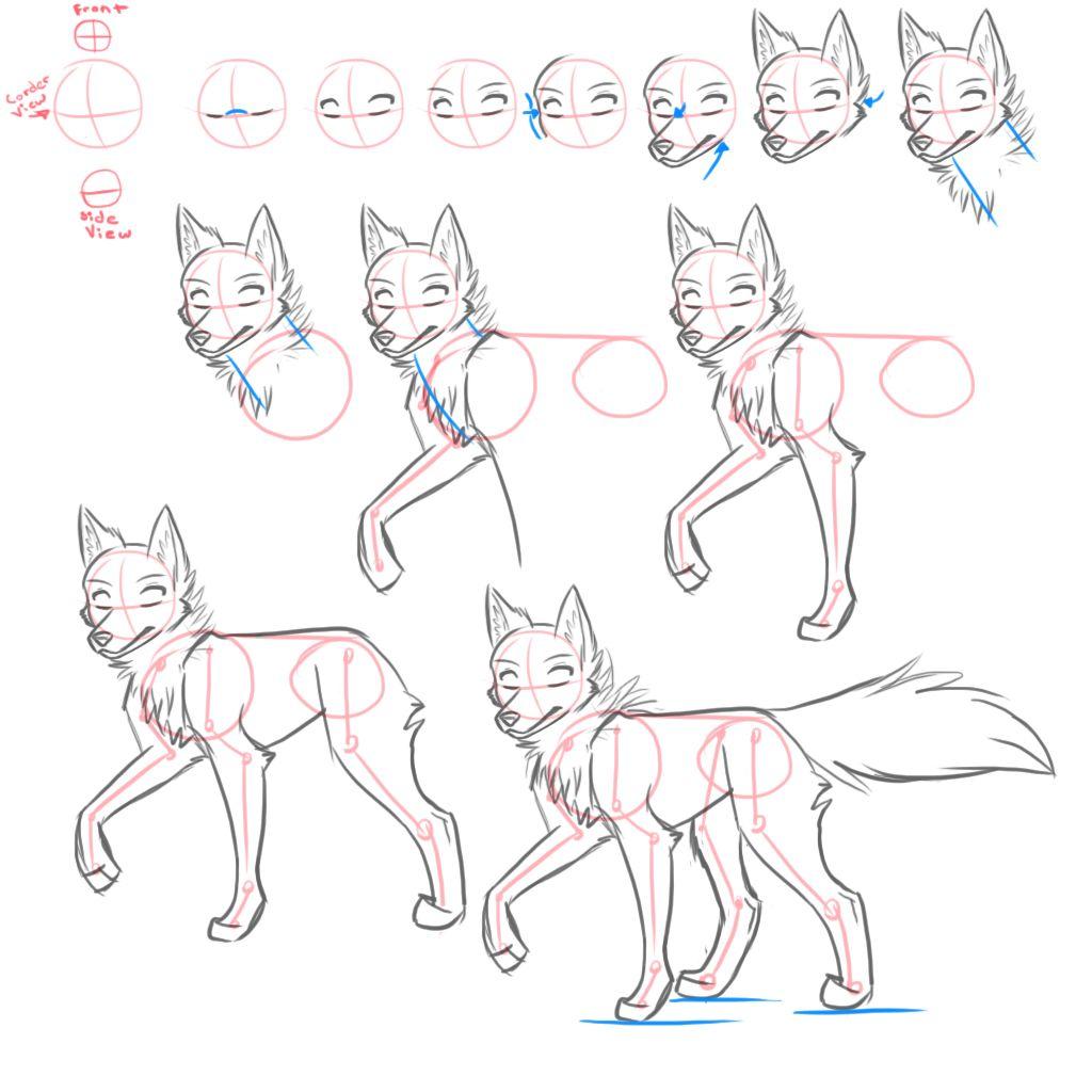 how_to_draw____canines_by_kimai-d7eug2c.jpg (1024×1024)
