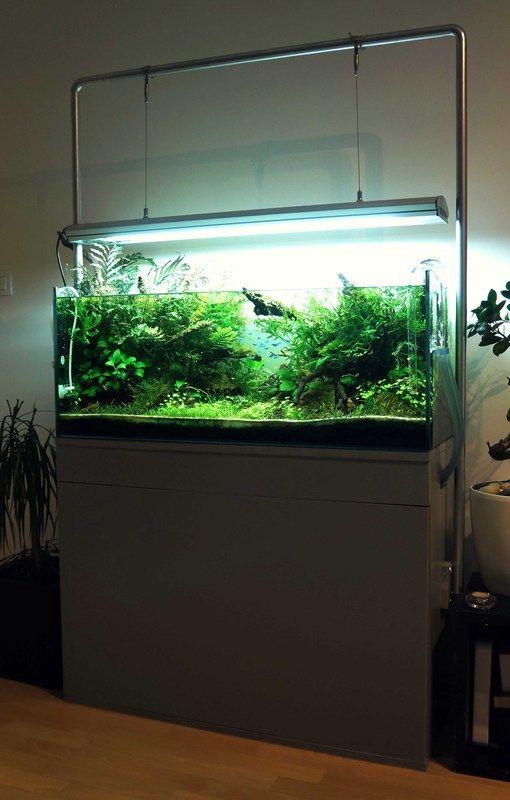 Aquascaping #aquascaping #aquarium