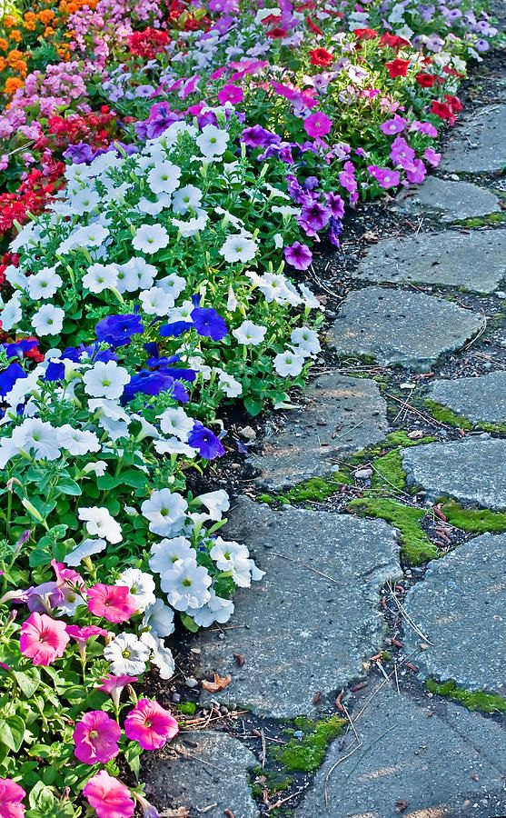 Pin By Anna Wedding On Gardening And Landscape Flower Bed Plants Beautiful Gardens Flowers Perennials