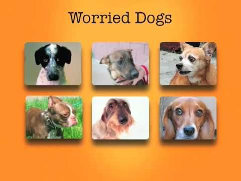 Great Video On Dog Body Language And Stress Calming Signals Dog