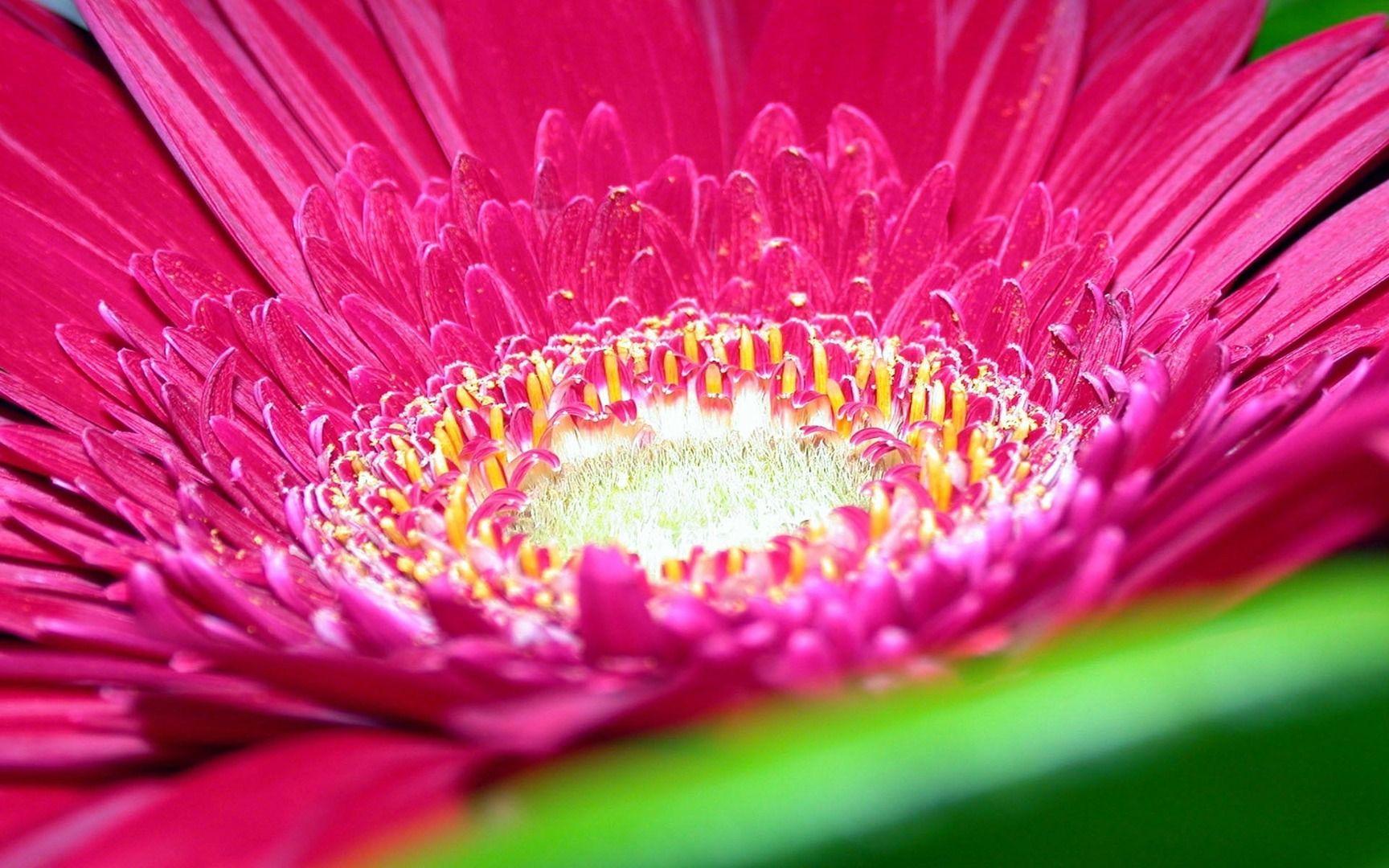 Spring Flowers Wallpaper Wallpaper Hd The Best Home Decor Ideas Flower Iphone Wallpaper Beautiful Flowers Wallpapers Spring Flowers Wallpaper