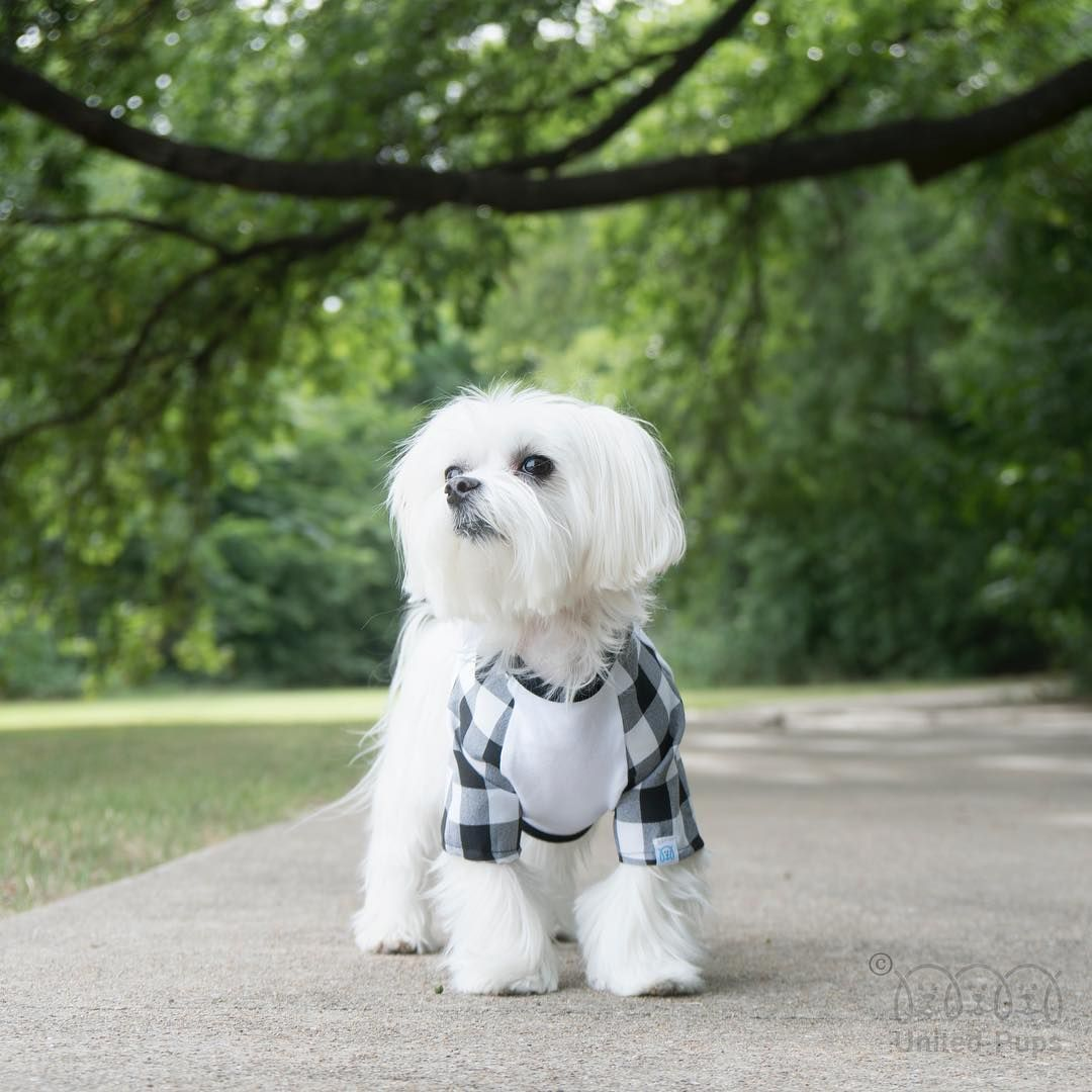 Pin By Sandi Farrell On Maltese Maltipoo S Dogs Pets Small Dogs