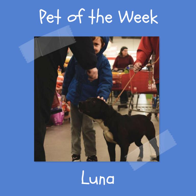 Animal Rescue & Adoption Animal rescue, Happy life, Rescue