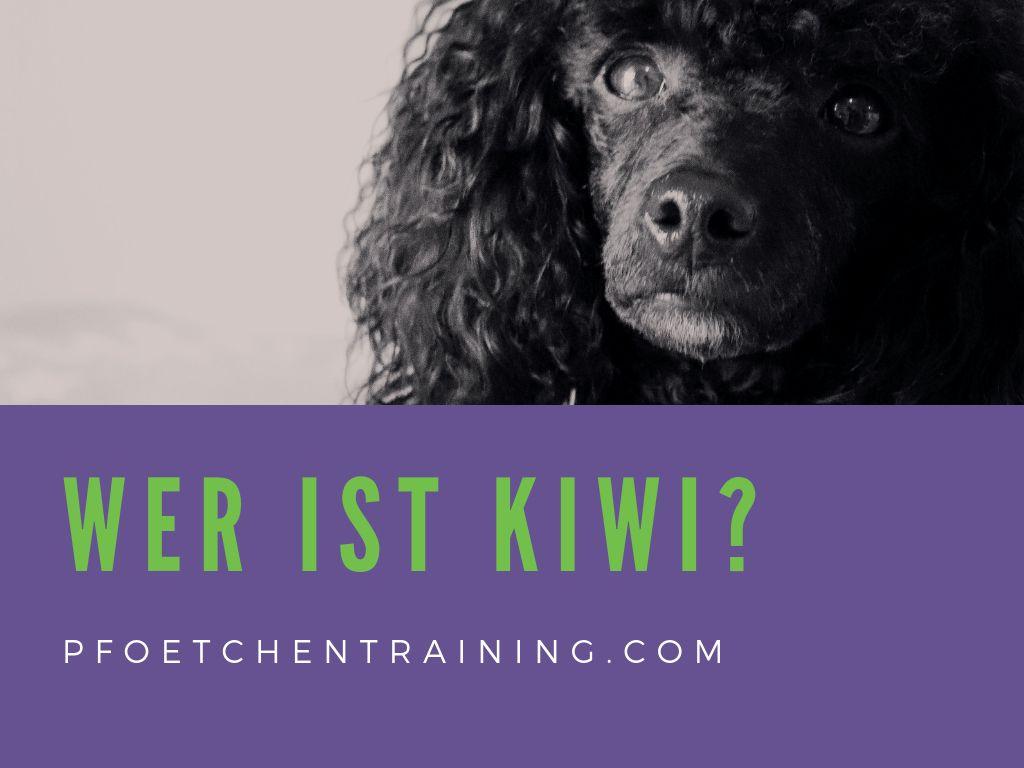 Hier Kommt Kiwi Hundchen Training Hundetraining Clickertraining