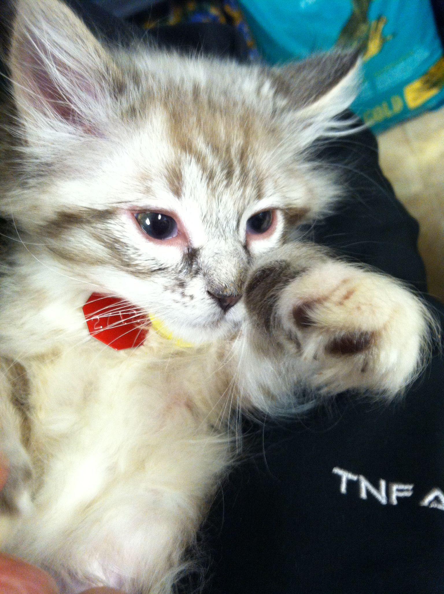 My new kitty , poppy