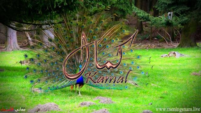 معنى اسم كمال وصفات حامل هذا الاسم Kamal Animals Bird