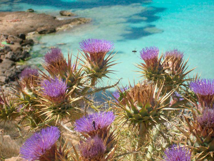 Vegetazione a Lampedusa