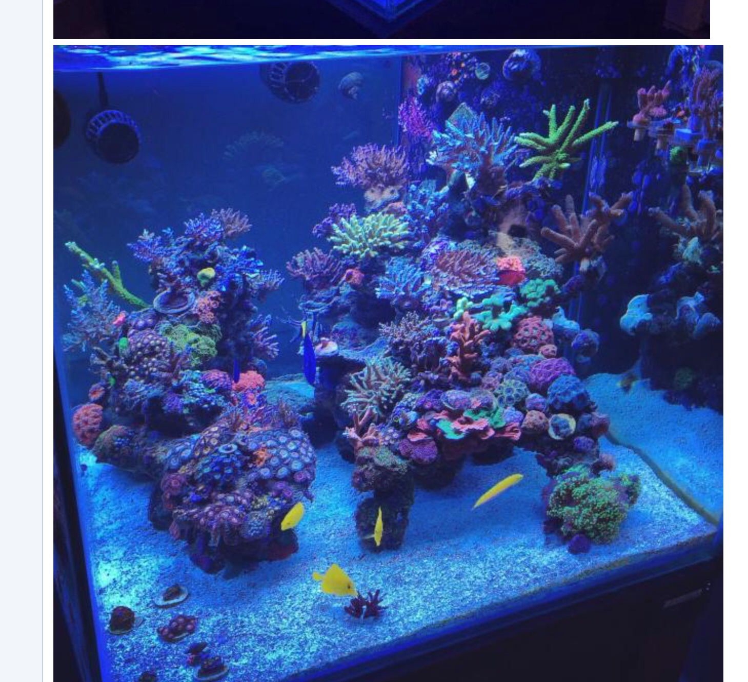 Reef tank live rock aquascape coral and fish