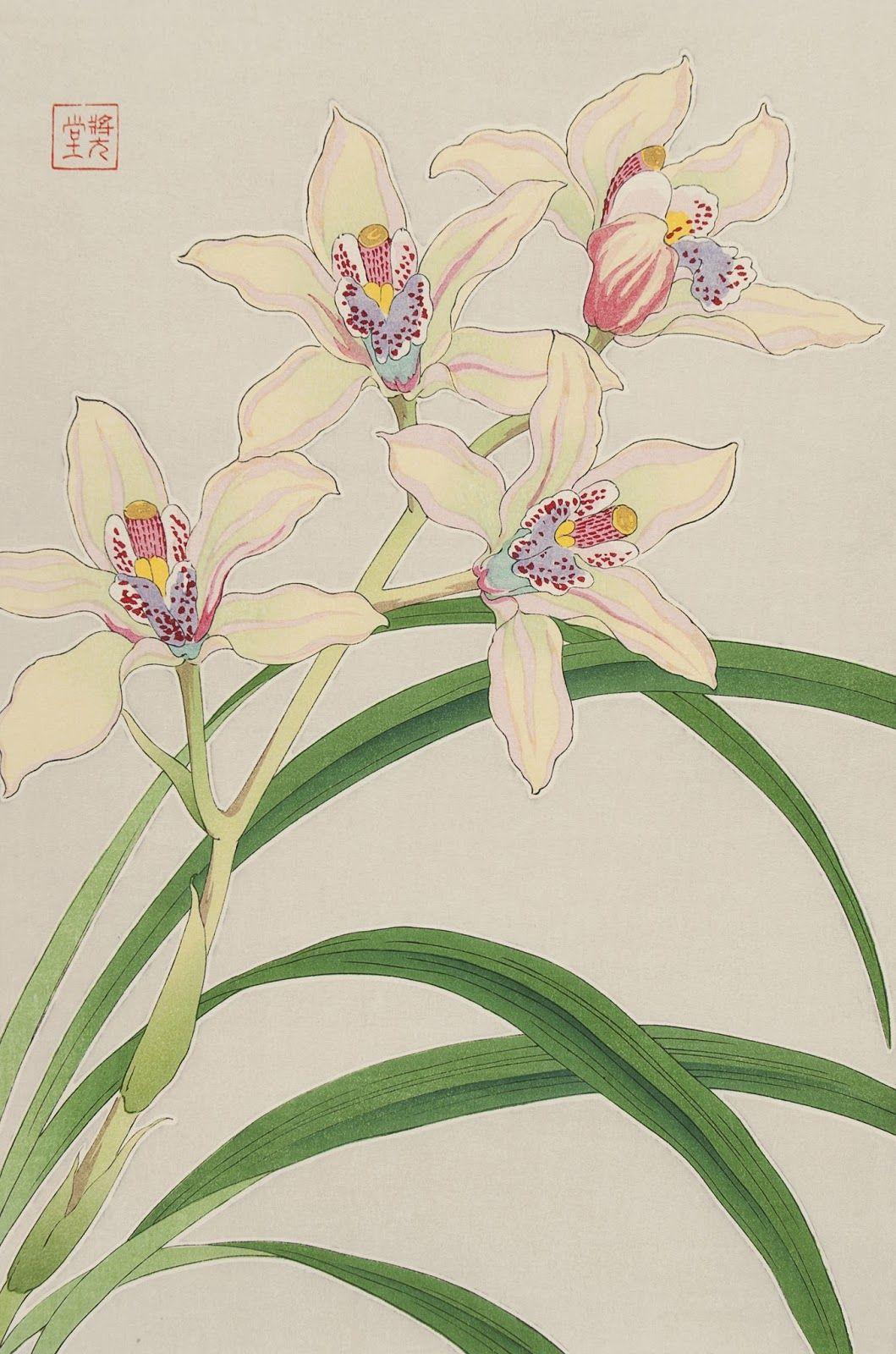 Shodo Kawarazaki (1889-1973), Orchid.