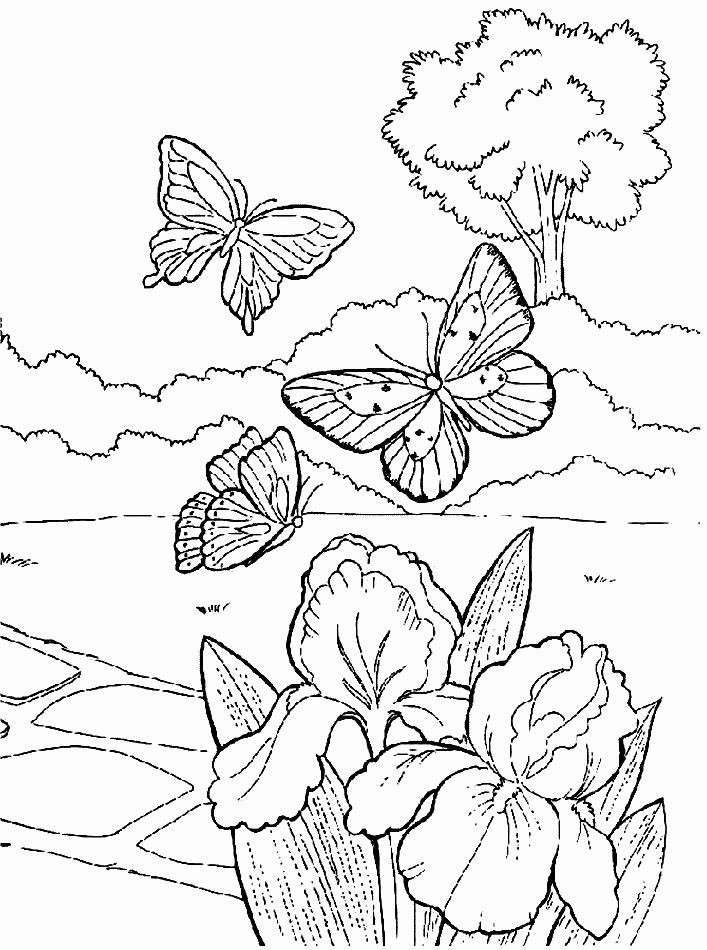Beautiful Butterfly In The Garden Coloring Printable