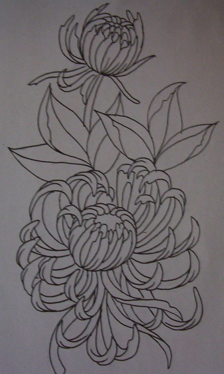 Pin by mary kay stein on tangle ideas pinterest explore lotus flower drawings and more izmirmasajfo