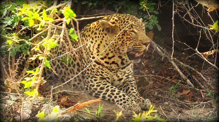 Tingana on #safarilive with @tay_mccurdy 10-27-16