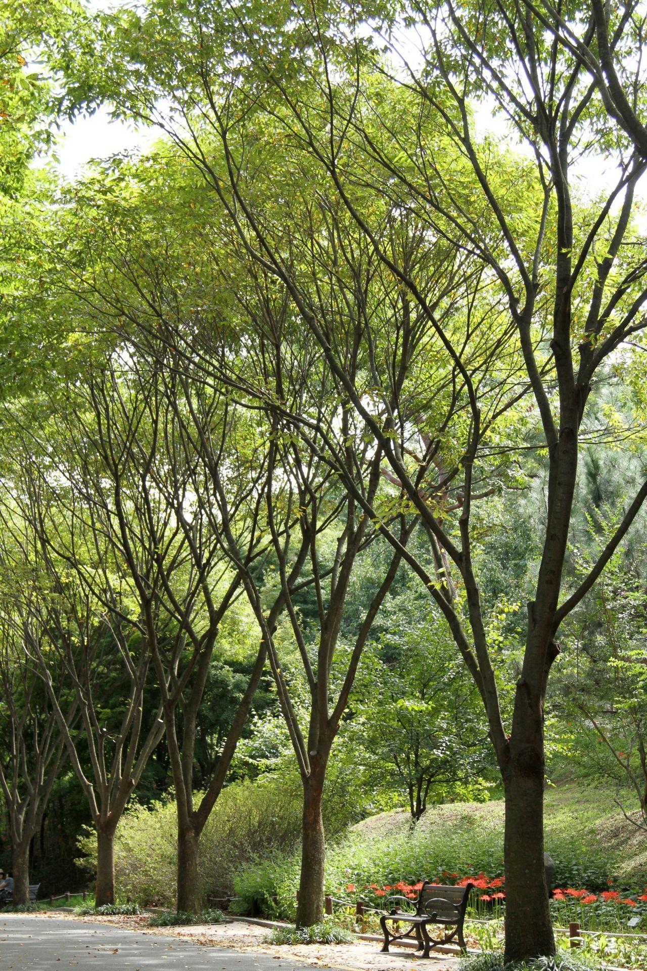 Daegu Arboretum, Daegu, South Korea (2014) Lindsay Mickles Photography www.theneverendingwanderlust.blogspot.com #그대로에집엄마를 #네트워크마케팅 #다단계마케팅 #피부관리 #ClassyLadyEntrepreneur www.RadiantFitAndHappy.com ⭐️⭐️ www.SkincareInKorea.info