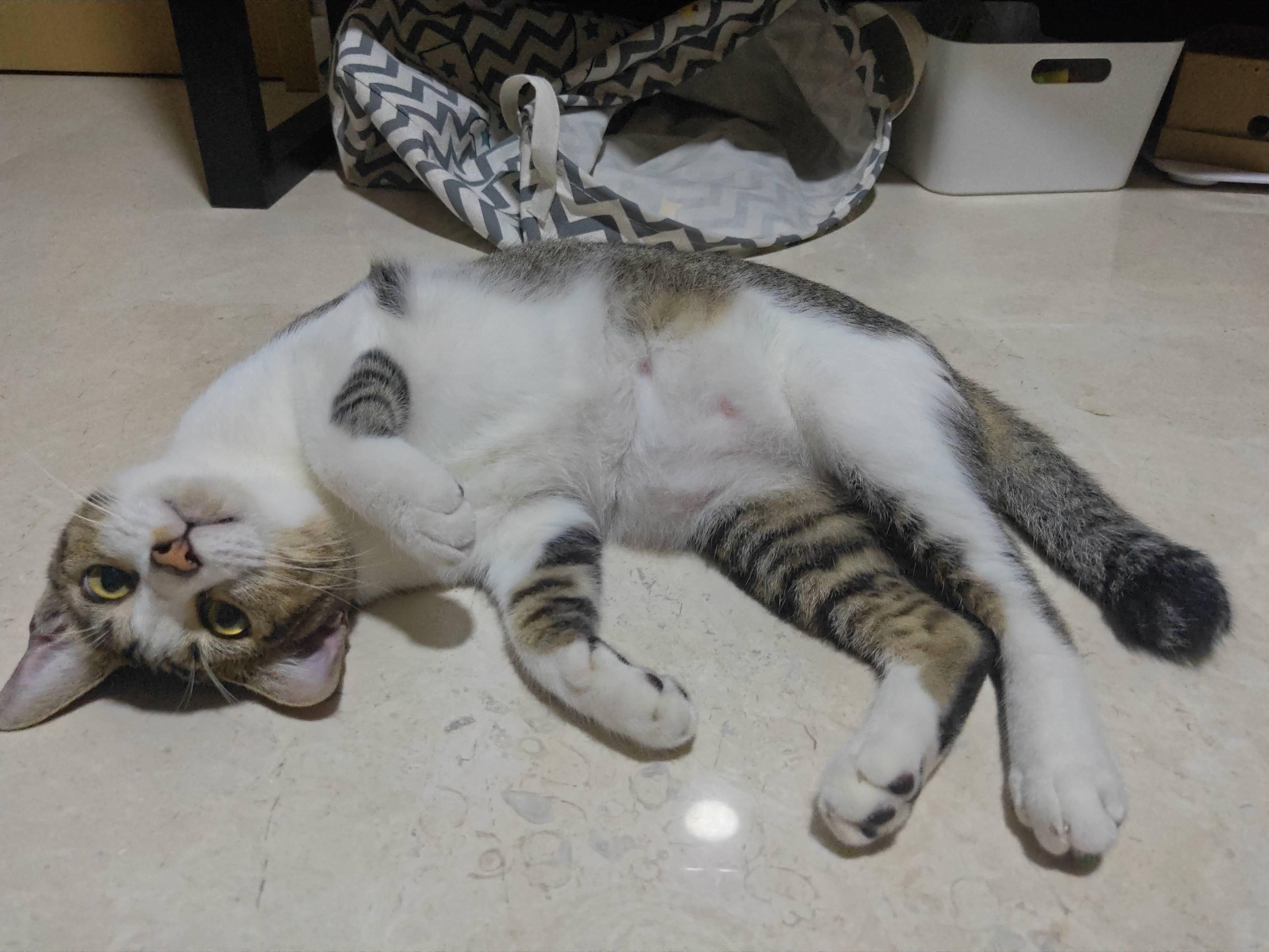 Halp I Think My Cat Is Broken Cats Cat Photo Cat Pics
