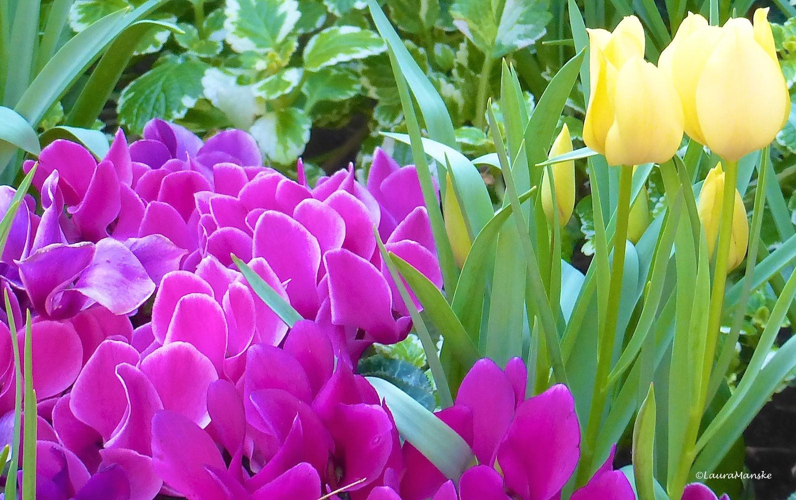 Happy Countdown To Spring Beautiful Flowers Quotes Punkynn