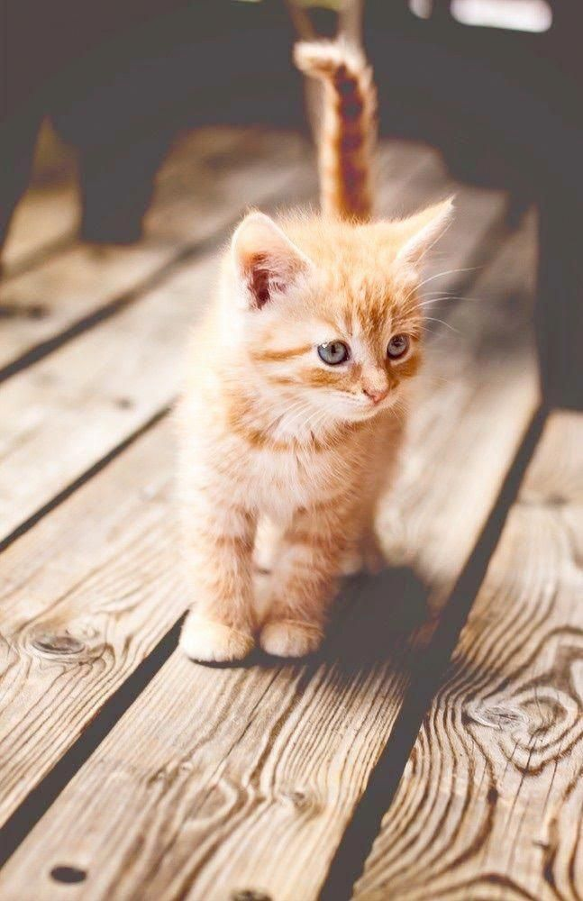 Beautiful Pictures Of Cats And Dogs