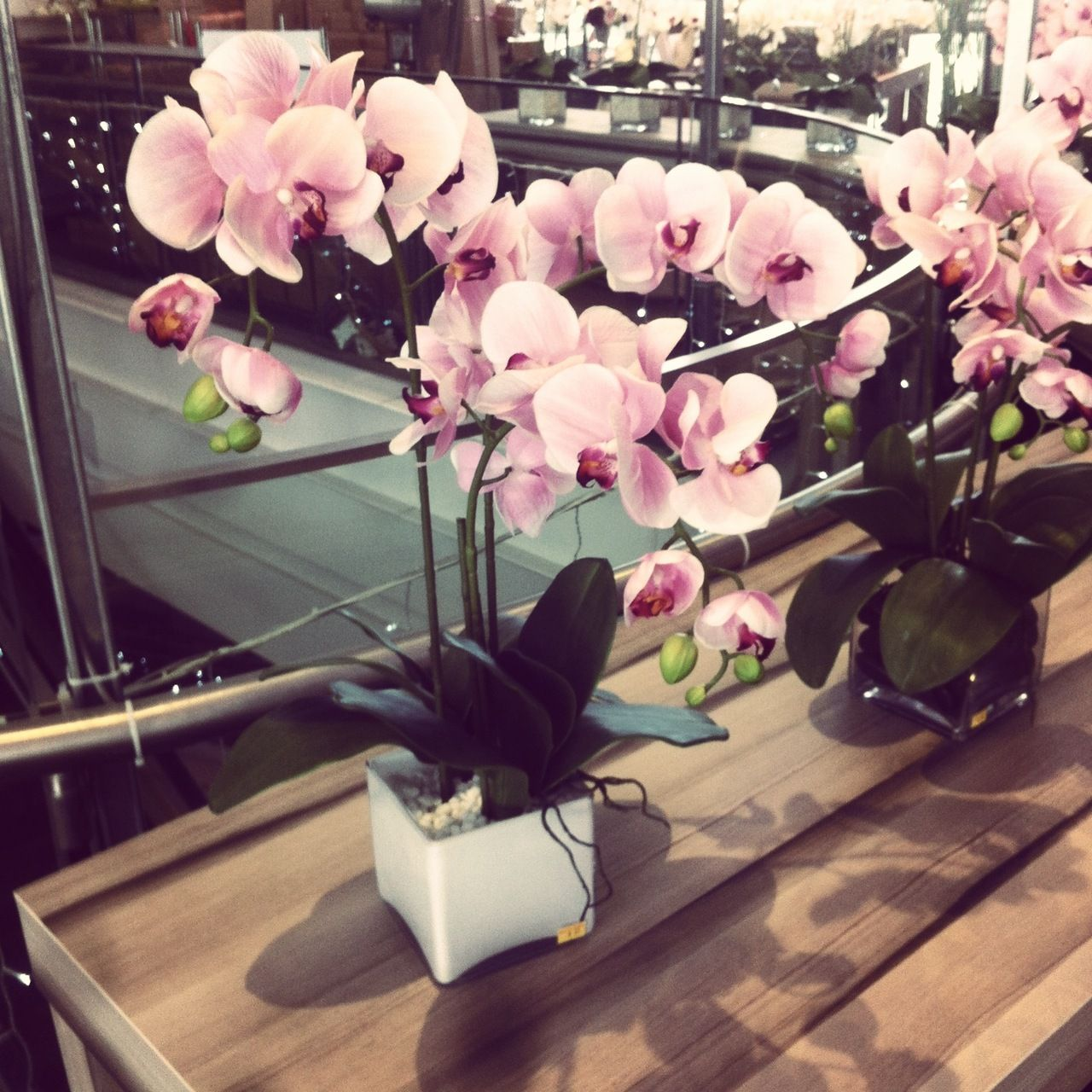 :: nothing like fresh orchids in house ::