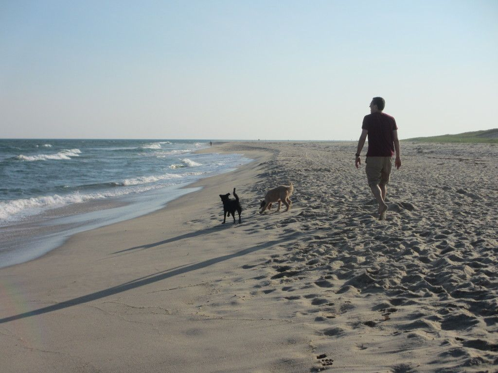 Did You Know Nantucket Is Super Dog Friendly Find A Pet Friendly