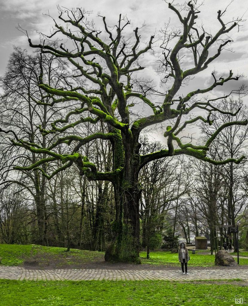 http://www.tsu.co/JUMOWA/120736897 #neroberg #wiesbaden #tree #green #colorpop