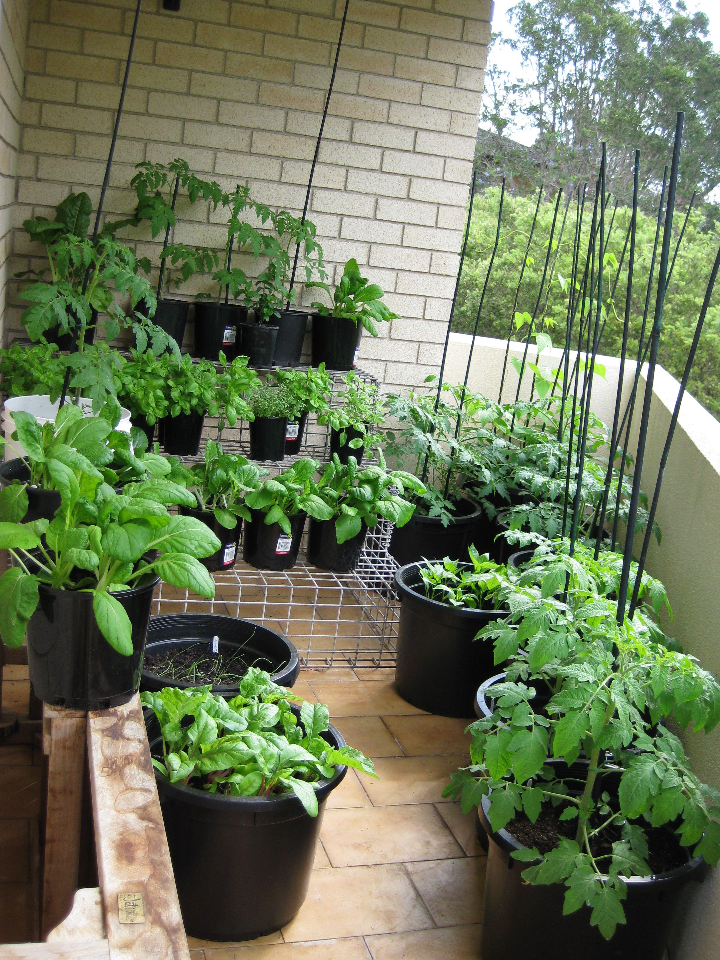 17 Inspiring Balcony Garden Australia That Will Make
