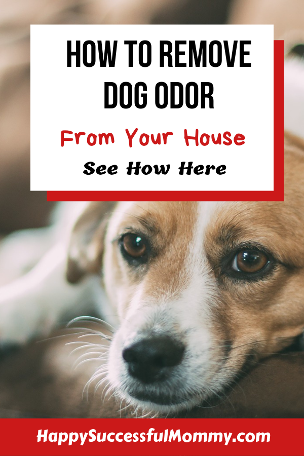 How To Get Rid Of Dog Fur In House