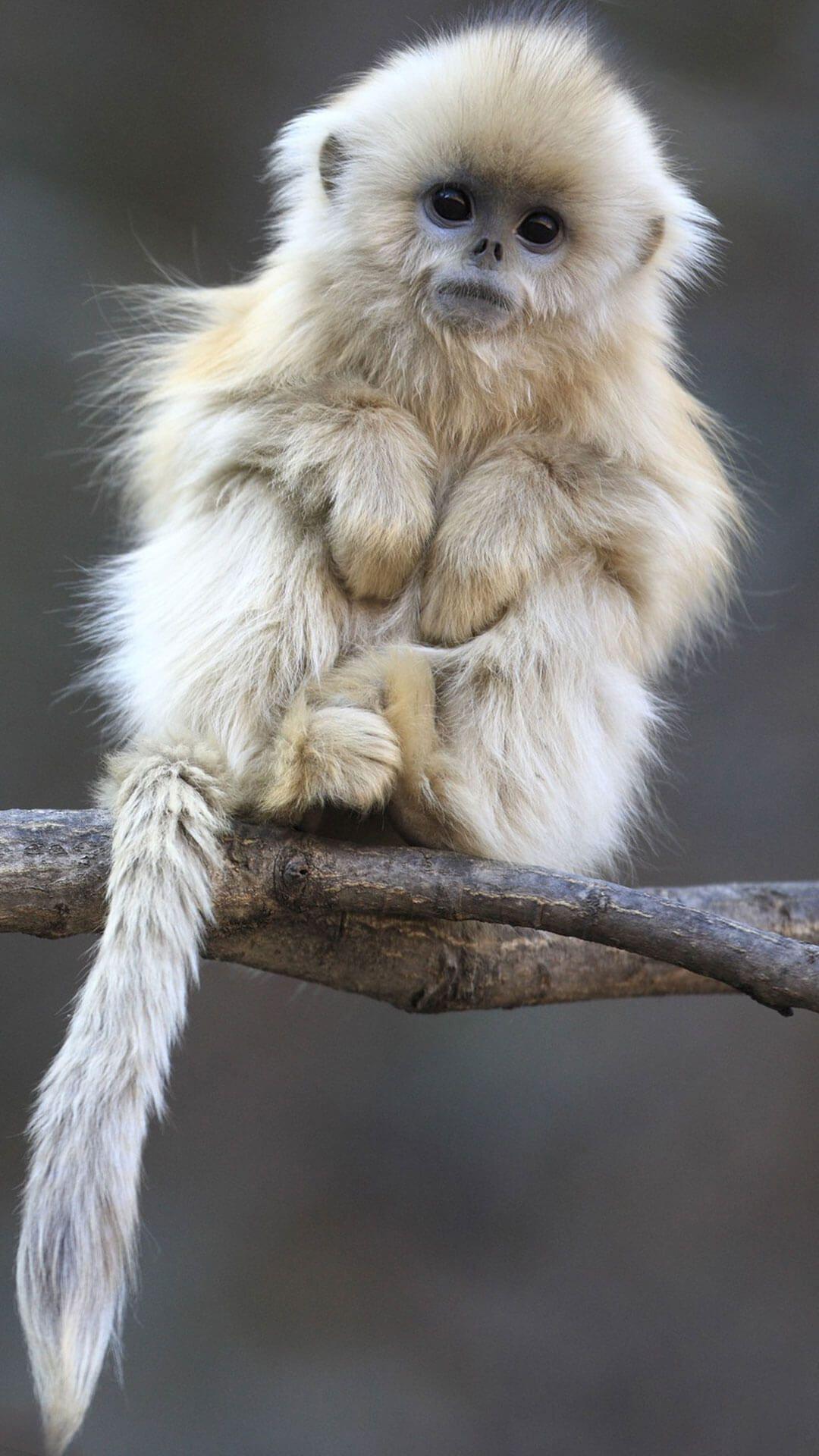 Cute Monkeys Wallpaper iPhone 6 HD Cute animals, Animals