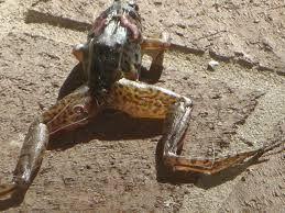 resultado de la imagen para que pueda ver la rana