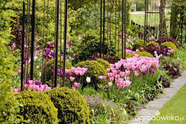 Galeria Zdjec Ogrod Kwiatowy Z Cebulek Ogrodowisko Spring Flowers Secret Garden Flowers